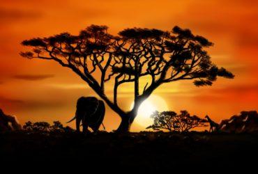 african_landscape_by_dasflon-d5l9t7c5