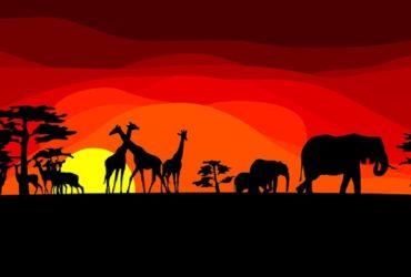 drawn-sunset-savannah-sunset-578671-4973092